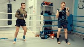 两位拳击手专业培训马戏团的与哑铃 股票录像