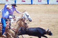 两位牛仔系住小牛在圈地 免版税库存照片