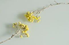 两凋枯了到达为彼此的黄色花 库存图片