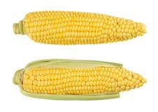 两剥甜玉米壳玉米棒,被隔绝,在白色 库存照片