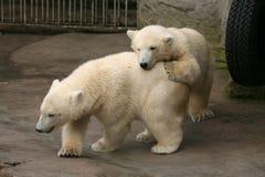 两北极熊崽 库存图片