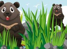 两北美灰熊涉及草 皇族释放例证