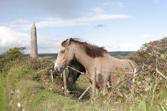 两匹吃草的爱尔兰马和古老圆的塔 免版税库存图片