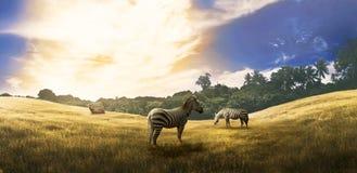 两匹斑马和一头鹿在大草原 免版税库存照片