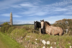 两匹爱尔兰马和古老圆的塔 库存图片