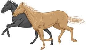 两匹被隔绝的疾驰的马 免版税库存照片