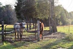 两匹马和美好的大气照明设备 免版税库存照片