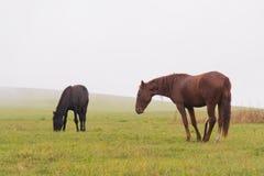 两匹马在一个绿色领域吃草反对低云和雾背景  免版税库存照片