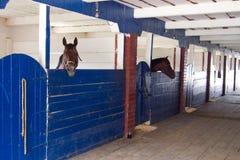 两匹马在小牧场槽枥 免版税库存图片