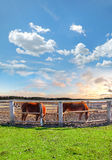 两匹马在畜栏 免版税库存照片