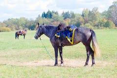 两匹马在草甸吃草 免版税库存图片
