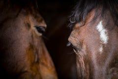两匹马在他们的槽枥 免版税库存照片