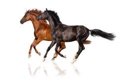 两匹马奔跑疾驰 库存照片