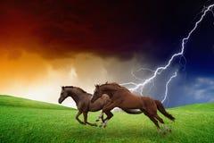 两匹马,闪电风暴 库存照片
