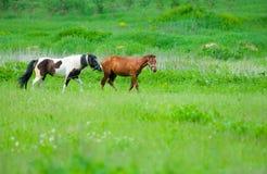 两匹马 免版税库存照片