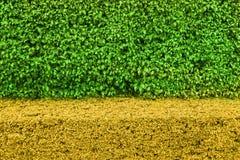 两口气自然绿色留下墙壁背景 库存图片