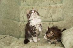 两只一点小猫使用 库存照片