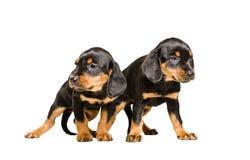 两只一起站立小狗品种斯洛伐克的猎犬 库存图片
