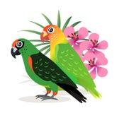 异乎寻常的鸟,传染媒介的美丽的五颜六色的鹦鹉爱情鸟 皇族释放例证