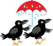 两只乌鸦和伞 免版税库存图片