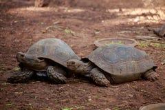 两只乌龟 库存图片