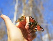 两只五颜六色的美丽的易碎的蝴蝶坐他们的手指 免版税库存照片