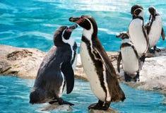 两只企鹅站立 免版税库存照片