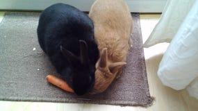 两只兔子和一棵红萝卜 库存照片
