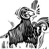 两只公羊 库存图片