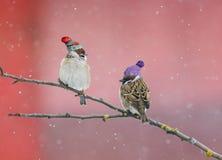 两只参加在一棵树的逗人喜爱的小的鸟麻雀在庭院里  免版税库存照片
