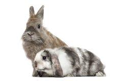 两只哀伤的兔子, 免版税库存图片