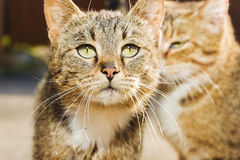 两只哀伤的红色街道猫 免版税图库摄影