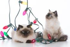 两只圣诞节小猫 免版税库存照片