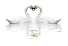 两只天鹅的图象在湖的 免版税库存照片