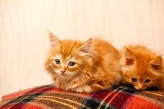 两只好的小的姜小猫坐格子花呢披肩 免版税库存图片