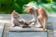 两只姜小猫在庭院里 库存图片