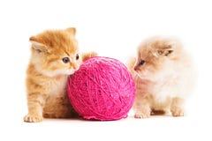两只嬉戏的小猫 图库摄影