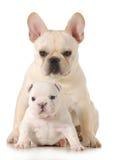 两只小狗 免版税库存图片