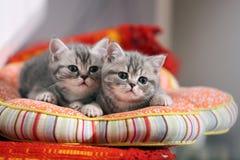两只小猫在一张轻松的床上 库存图片