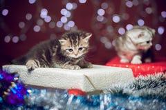 两只小猫坐圣诞节礼物盒 库存图片