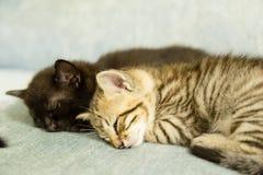 两只小猫睡着在一个蓝色长沙发 免版税库存图片