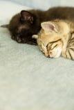 两只小猫睡着在一个蓝色长沙发 库存图片