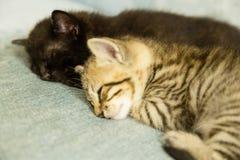 两只小猫睡着在一个蓝色长沙发 图库摄影