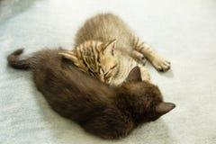 两只小猫睡着在一个蓝色长沙发 免版税库存照片