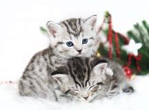 两只小猫谎言在圣诞树下 库存图片