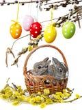 两只小的兔子 库存图片