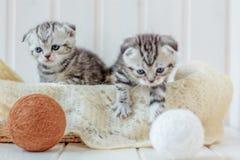 两只小的小猫使用与毛线的,羊毛球 免版税库存图片