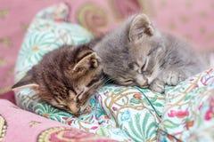 两只小的小猫在bedroom_的一个枕头睡觉 免版税库存照片