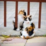两只小的小猫 免版税库存图片