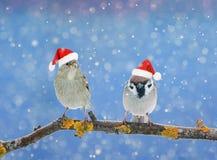 两只小的滑稽的鸟坐一个分支在雪的冬天 免版税图库摄影